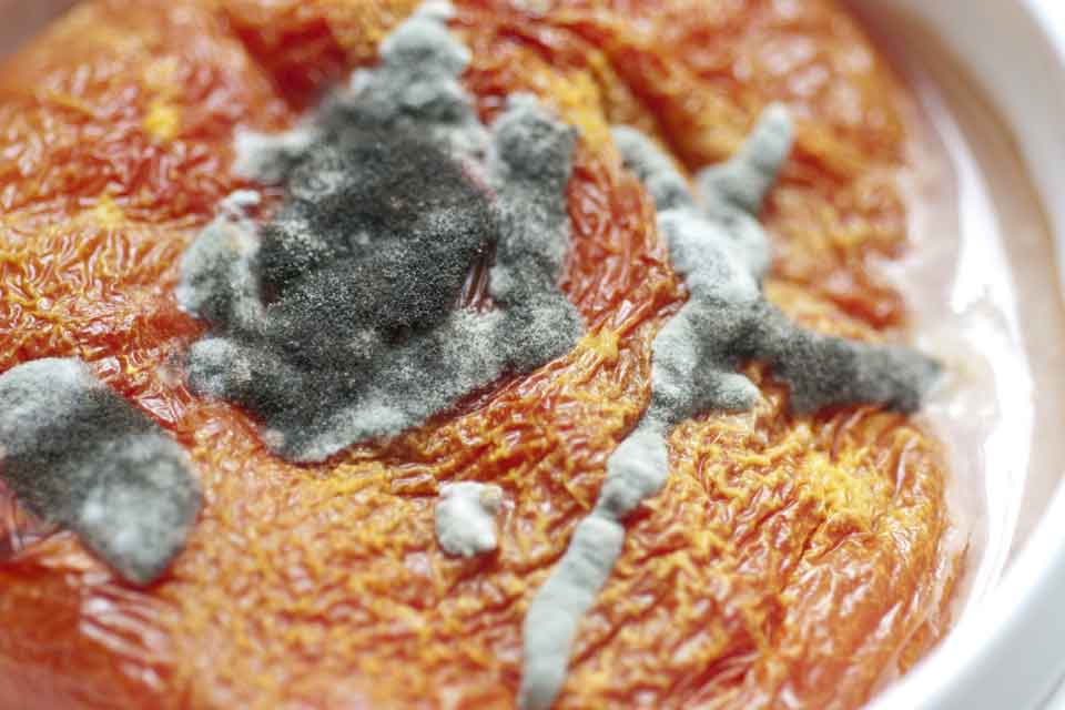 mold on pizza